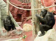 Verriegelungsantrieb: Sicherheit vor  wilden Tieren