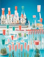 Sterilstopfen SILICOSEN/BIO-SILICO: HiClass-Sterilstopfen für Kulturen