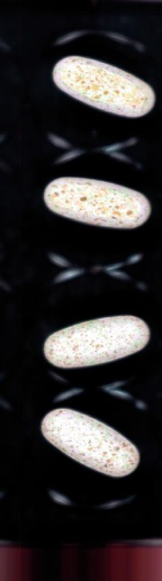 Spektralkamera: Bildgebende NIR-Spektroskopie  in Chemie und Pharmazie