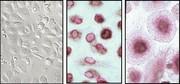 Bio-Cluster und Applikationen: Neue Ära  in der Zellforschung