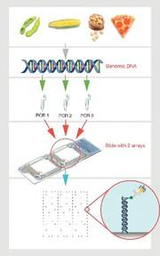 GMO Microarray Kit DualChip: EU-validierter GMO Microarray Kit
