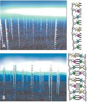 DNA-Labeling: Genetischer Fingerabdruck für Medikamente