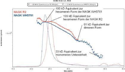 Fachbeitrag: Stabilität der Quartärstruktur eines Proteins