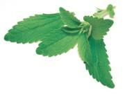 Stevia-Referenzsubstanzen: Referenzsubstanzen für Stevia