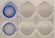 Liquid-Robotics: Dosieren im Pikoliterbereich:  Was heute machbar ist