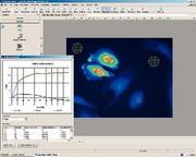 Software AxioVision FRET 4.6: Schnelle Auswertung von FRET