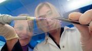 Life Sciences: Blutgefäße aus  dem Drucker