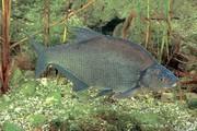 Umweltanalytik: Fischtest