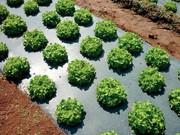 Grüne Werkstoffe: Auf dem Acker  gut verpackt