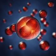 Kühl-Bad Glacier G50: Kryokonservierung und Reanimation lebender Zellen