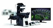 Laser-Scanning-Mikroskop: Lebendzellbeobachtung
