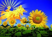 Photovoltaik-Lösungen: Nachhaltige Energieerzeugung