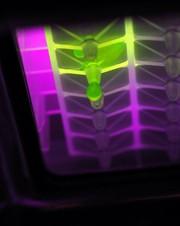 Filtrations-Mikrotestplatten: Multiwell-Filtrations-Mikrotestplatten