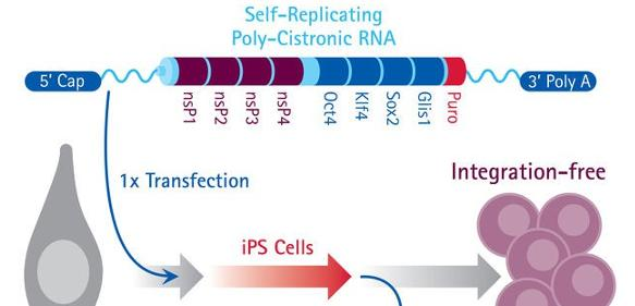 RNA-Reprogrammierungskit Simplicon
