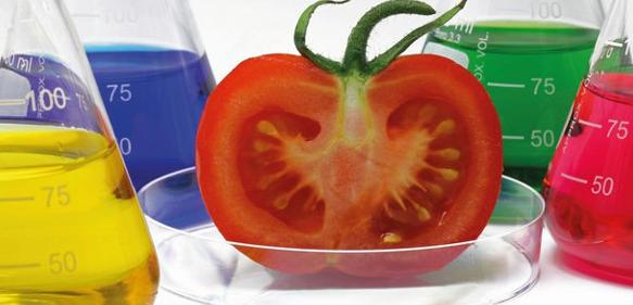 Pestizid- und Antibiotika-Rückstände messen: Probenvorbereitung am Beispiel von Tomaten