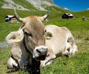 Flurfördertechnik unterstützt Käse bei Pflege und Reifung