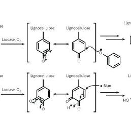 laccase-mediated lignocellulose