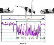 Yogastellungen der Ionenkanäle: Internationales Forscherteam entschlüsselt Aktivitätsmuster