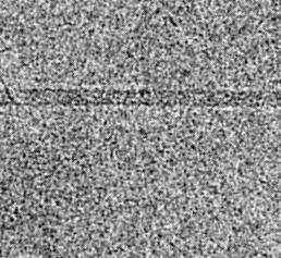 Cryo-elektronenmikroskopische Aufnahme eines Filamentes