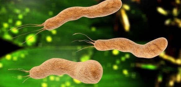 Feinstrukturen des Lebens: Protein-Filament in atomarem Detail