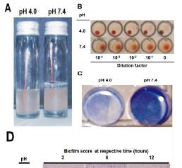 EAEC Under Stress: Loss of Biofilm Formation