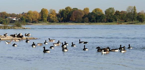40 Jahre Abwasserabgabengesetz: Wie die Flüsse wieder sauber wurden