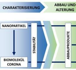 Stufenkonzept zur toxikologischen Bewertung von Nanomaterialien