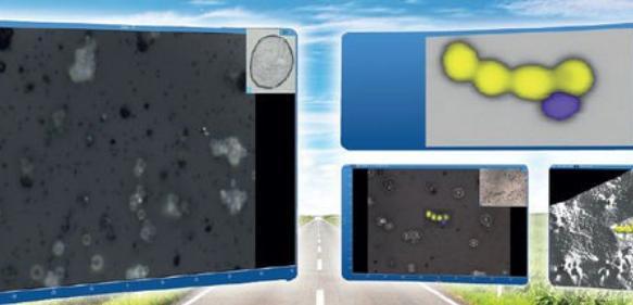 Software für Raman-Imaging