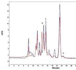 Chromatogramme einer typischen Weinprobe