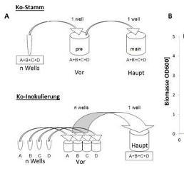 Impfstoffentwicklung: Polyvalente RNA-Wirkstoffcocktails biotechnologisch herstellen