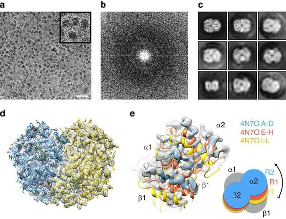 Ernst Ruska Prize 2017: Cryo-EM structure of haemoglobin at 3.2 Å determined with the Volta phase plate