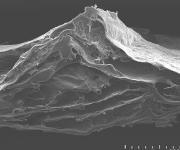 Kollagen-Vlies für die regenerative Medizin: Gut gerüstet
