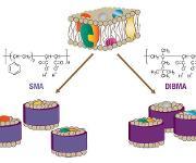 Extraktion von Membranproteinen aus Biomembranen