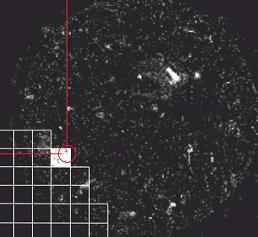 Schematische Darstellung der Dunkelfeldbeleuchtung