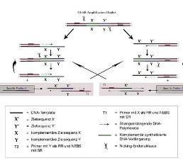 Molekulare Infektionsdiagnostik: RSV in wenigen Minuten ausschließen
