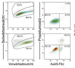 Multiparameterfärbung von HT-29 Zellen