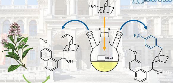 Der Naturstoff Chinin (Bildmitte) und ein neues Arylanalogon (rechts) mit verbesserter Aktivität gegen Malaria-Erreger. (Bild: Maulide Group, Universität Wien)