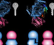 Intermolekulare Bindungen: Proteine mit interface add-ons