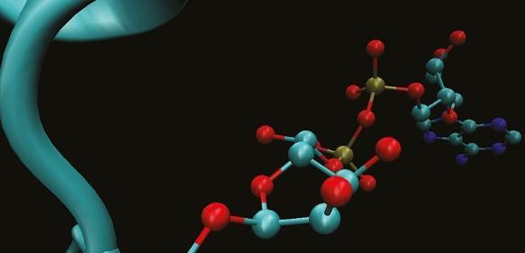 Komplexe Markierung für die DNA-Reparatur: Die 3D-Darstellung zeigt die Anheftung der ADP-Ribosylierung an die Aminosäure Serin im Protein (türkis). (© MPI f. Biologie des Alterns)