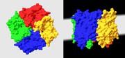 Life Sciences Innovations: Eiweiße übernehmen Filterfunktion - Hochselektive und superschnelle Filter werden denkbar