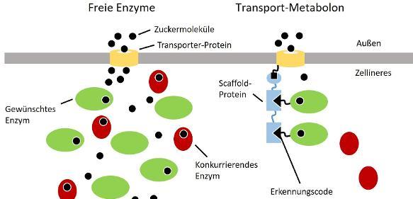 """Bioökonomie: """"Molekulare Fließbänder"""" optimieren Rohstoffnutzung"""