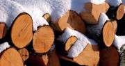 Wasserstoffproduktion: Energie aus Holz