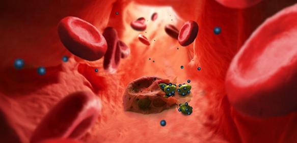 Polymer-Vesikel: Mit Nano-Imitaten gegen Malariaparasiten