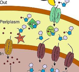 Cholera-Bakterium