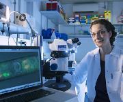 """Luisa Cochella untersucht am Fadenwurm, welche Gene die Identität von Zellen bestimmen. Im Mikroskop sind die Zellen erkennbar, mit denen die Würmer Kohlendioxid """"riechen"""". © IMP/Beck"""
