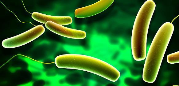 Mikrobielle Gemeinschaften: Darmbakterien mit Einfluss auf Herz und Kreislauf