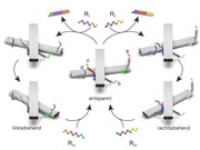 Schalter für die Nanooptik: DNA und Gold-Nanostäbchen als Lichtschalter