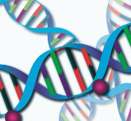 DNA-Methylierung (© Schuster, DKFZ)