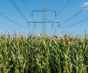 Bioelektrochemische Synthese: Kraftstoffe und Basischemikalien aus Abfällen und Elektrizität