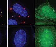 Virologie: Forschungsteam trickst Ebola-Virus aus